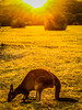 "Sunset snack <a style=""margin-left:10px; font-size:0.8em;"" href=""http://www.flickr.com/photos/41134504@N00/12924705565/"" target=""_blank"">@flickr</a>"