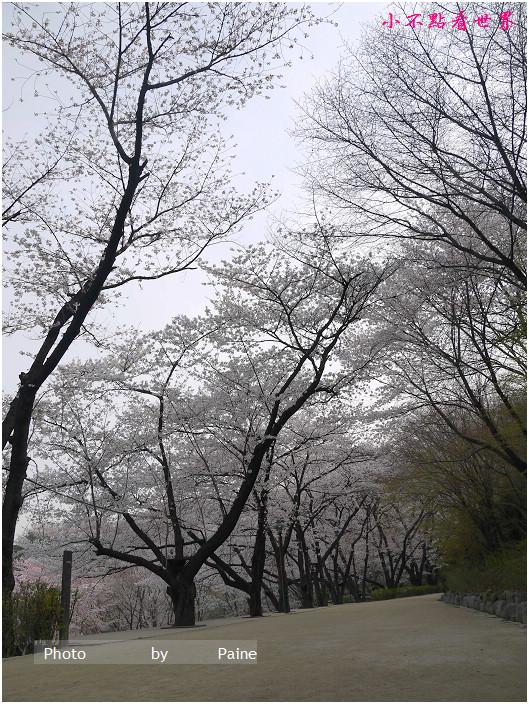 首爾鞍山公園櫻花道안산공원벚꽃길 (5).jpg