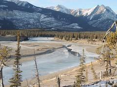 North Saskatchewan River Alberta (kevinmklerks) Tags: alberta rocky mountains kootenay kootney plains lake abraham falls forest floodplain siffleur