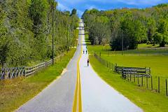Sugarloaf Mountain, Lake County, Central Florida, USA (Jorge Marco Molina) Tags: sugarloafmountain florida usa geology bicyclist lakecounty hill sandhill centralflorida highelevation sunshinestate lakewalesridge floridahill road trees bikeriding fence