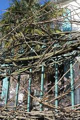 A l'abri des regards (Fontenay-sous-Bois Officiel FRANCE) Tags: fontenay fontenaysousbois regionparisienne valdemarne iledefrance 94 94120 fsb france canon canong1x outside exterieur rue street plante barreaux bars vegetal