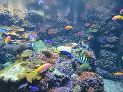 00734919 Aquarium Berlin 1 - 2017 (golli43) Tags: aquariumberlin zoo fische krokodile quallen wasser wasserpflanzen amphibien insekten unterwasserwelt