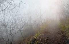 là-haut (cébé céline) Tags: horizon voie sentier chemin détour écart nuage montagne montroyal montréal nikond7200 nikon detour gap cloud mountain mont royal montreal mist horizonte camino desvío brecha nube montaña mount niebla