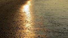 VLIELAND, THE NETHERLANDS (pwitterholt) Tags: vlieland friesland wadden noordzee beach strand zandstrand zand sandbeach sand zonlicht sunlight canon canonsx40 canonpowershotsx40hs canonpowershot