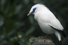 Aviary HK (Gallosdegaraje) Tags: bird birds animal hong kong asia 2017 cora diz vila nature aviary city wings blue