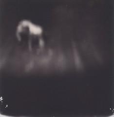 the elephant in the room (thombe77) Tags: polaroid macro black white schwarz weiss elefant elephant abstract dark