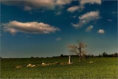 Quis ut Deus? (piontrhouseselski) Tags: cz moravia kozichovice cross fuji xt2 sky