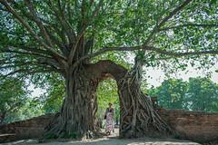 Entrance... (Kompakin Borwornpakramil) Tags: nikon d5 afsnikkor2470mmf28eed portrait mywife trees entrance girls moodandatmosphere availablelight happiness ayutthaya temple totallythailand