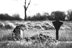 L1004140_v1 (Sigfrid Lundberg) Tags: lund sweden skåne staffanstorp flackarp stlars leica aposummicronm 50mmf20asph stlarskyrkogård fs170409 motsatser fotosondag aposummicronm50mmasph
