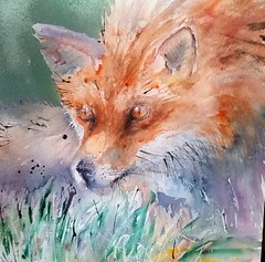Fox study (sushipulla) Tags: fox wildlife art artwork painting watercolour watercolor nature
