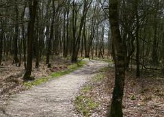 Nature area Zwillbrocker Venn (joeke pieters) Tags: 1330817 panasonicdmcfz150 zwillbrockervenn duitsland deutschland germany landschap landscape landschaft paysage pad path bomen trees licht light