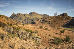 Langdale View (.Brian Kerr Photography.) Tags: langdalepikes lakedistrict landscapephotography lakes langdale light landscapes pikes cumbria sidepike rocks littlelangdale bleatarn clouds availablelight mountains morning outdoor outdoorphotography nature naturallandscape natural blue yellow colour orange tree birchtree birches opoty sony a7rii briankerrphotography