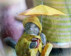 Spring Showers  ☔ (Through Serena's Lens) Tags: spring showers rain april stilllife umbrella birdy hat raincoat yellow dof