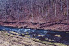 Whitewater River, Minnesota (Tony Webster) Tags: minnesota whitewaterriver whitewaterstatepark leaves spring trees saintcharles unitedstates us