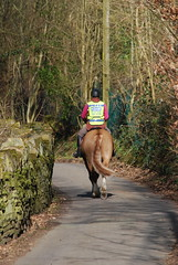 Sunday morning walk ..... (Halliwell_Michael ## Thanks you for your visits #) Tags: calderdale westyorkshire nikond40x 2017 spring springtime brighouse hoveedge redbeckvalley trees horse horses perspective lane road countrylane