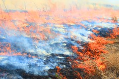 CRP controlled burn near Chester IA 854A7225 (lreis_naturalist) Tags: crp controlled burn chester howard county iowa larry reis