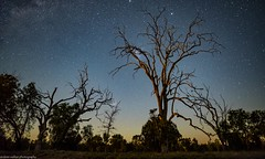 tortured trees in the moonlight (andrew.walker28) Tags: trees tortured moonlight night light starlight stars nightscape landscape long exposure