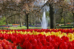 IF8A5844 (cwhilbun) Tags: keukenhof lisse holland netherlands tulip outdoor