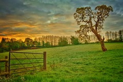 Field of Dawn (Ashdon McFall) Tags: nature wild alone manual d3200 composition blue orange sunrise sky green walk lone morning dawn grass hate field tree