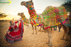 Experience the Rich Culture & Heritage of the Land of Kings.. (travelsiteindia) Tags: camel travelsiteindia desert rajasthan royalrajasthan culture heritage sand monuments palace forts tourism sunset
