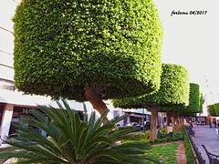 Almeria 05 (ferlomu) Tags: almeria andalucia arbol calle ferlomu