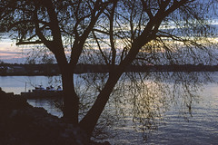 975-1 (George Hamlin) Tags: ohio bay view lake erie water twiight evening willow tree silhouette sky clouds band light branches photo decor george hamlin photography shadow color
