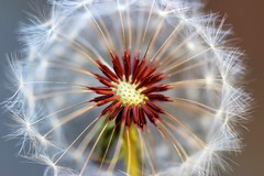 Inner Circle (dianne_stankiewicz) Tags: naturethroughthelens