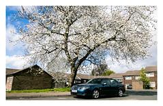 Spring has Sprung (Wil Wardle) Tags: wilwardle photography canon 5dmk3 f28 canonef2470mmmk2 adobelightroom ebphoto britain britishphotographer england exploringtheautomobile saab saabaero blue leeds northernengland architecture housingestate spring cherryblossom