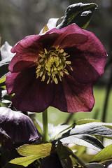 Spring in the Garden 1 (karl_eschenbach) Tags: spring flowers macro albuquerquebiopark apophysis newmexico nm
