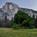 The Elm Tree and Half Dome