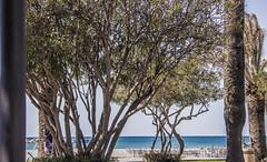 Trees (raymond_zoller) Tags: baum crnagora landscape mittelmeer montenegro arbre drzewo eau landschaft meer sea tree wasser water woda árbol черногория вода дерево море пейзаж средиземноеморе ხე