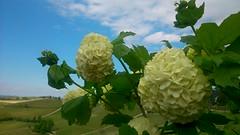 Energia      Energy (only_sepp) Tags: langhe serralungadalba campi vigneti fiori energia primavera prati allnaturesparadise