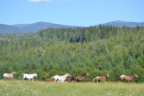 Green grass, blue skies and great horses!!! Yes please!  #wpguestranch #duderanch #guestranch #blueskies #ranchhorse #westernvacation #cowboylifestyle #horsebackriding #visitsandpoint #visitidaho #sandpointliving #sandpointidaho #pnw #idahoexplored