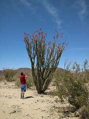 April 19, 2017 (72) (gaymay) Tags: california desert gay love riversidecounty joshuatreestatepark outside