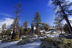 Snow on hill top (MikeDalePhotos..... 500,000 + views ==> Thank you) Tags: 1001nightsmagiccity mike dale photos michael snow blue sky utah brice hilltop pine tree