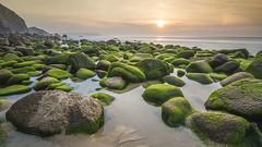 Seaweed garden (GC - Photography) Tags: verde green naranja orange azul blue playa beach rocas rocks atardecer sunset nikon d500 campelo lacoruña galicia españa spain gcphotography campelobeach playadecampelo filtrosnd ndfilters largaexposicion longexposure agua water mar sea