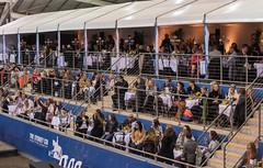 17429_Sydney_CDI_Quadrilles_0019.jpg (FranzVenhaus) Tags: athletes dressage australia equestrian riders horses ponies rug siec nsw sydney newsouthwales aus