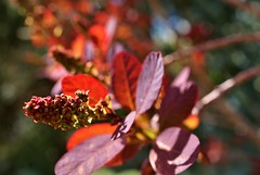 Spring Flowers (Meggiemae67) Tags: pink red sky plant flower color tree nature beauty leaves closeup leaf spring may petal lilac daffodil tulip