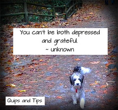 childless life (LauriePK) Tags: dog terrier tips depressed grateful infertility childfree quips childless