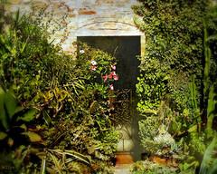 speaking among themselves in abundant whispers (eepeirson) Tags: door whispers aware vineleaves deniselevertov 10faves texturejenny abundantwhispers