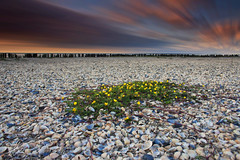 Moddergat Sunset (Jurjen Harmsma Photography) Tags: flowers sunset green beach nature yellow clouds composition canon landscapes movement exposure skies cities poles towns friesland fryslan waddensea airscapes 2013 moddergat jurjenharmsma