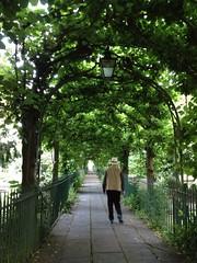 Green tunnel (FIDDYONE) Tags: man green lamp bristol path walk tunnel foliage walkway shade paving straight leafy clifton