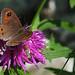 Farfalla, un attimo di vita