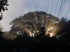 IMGP0503 The burning tree (shutterbroke) Tags: sun tree sunrise pentax burning optio rays ws80 shutterbroke
