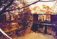 Winchester Avenue, West Lindfield : 1994 fires [photograph] (Ku-ring-gai Library) Tags: by allan 1994 photographed bushfires hedges kuringgai