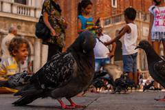 Venedig2 (HerrCooles) Tags: italien kinder taube venedig
