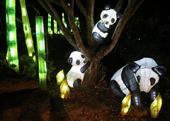Tonight at the Botanical Garden (Jee whiz!) Tags: pandas jardinbotanique montrealbotanicalgarden magiedeslanternes magiclanterns