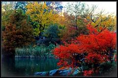 Autumn In Central Park New York (lelobnu) Tags: city newyorkcity autumn trees newyork fall nature colors centralpark streamzoo