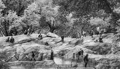 Playground (John St John Photography) Tags: newyorkcity autumn trees people blackandwhite bw playground photoshop children blackwhite rocks centralpark streetphotography monotone lightroom peopleofnewyork nikond800 silverefexpro vision:mountain=0629 vision:sky=0604 vision:outdoor=0979