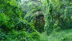 Gorgeous green (Pandiyan) Tags: green nokia woods cellphone chennai lumia1020